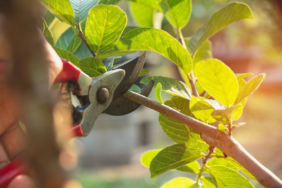 Seven Home Care Tips for Landlords in Los Angeles - Trim the Trees, Bushes, and Shrubs