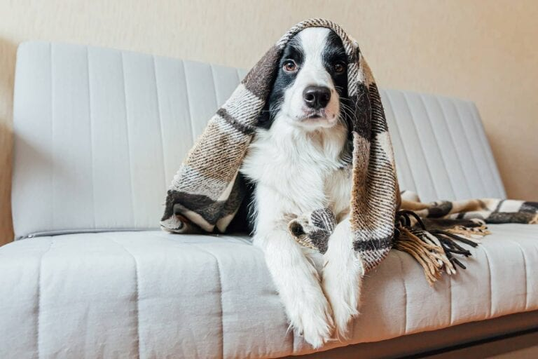 Elements of a Real Estate Lease - Pets and Usage