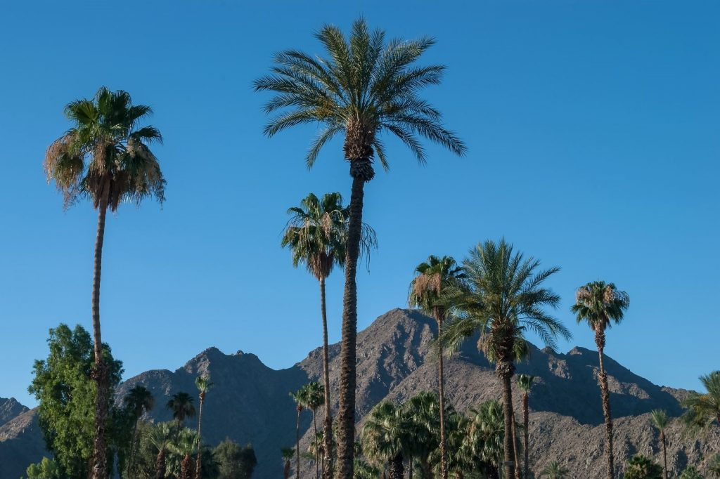 Palm Springs Real Estate Market Report 2020 Traditional Rentals
